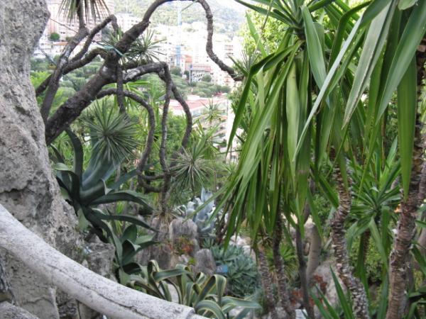 jardin-exotique-montecarlo.jpg
